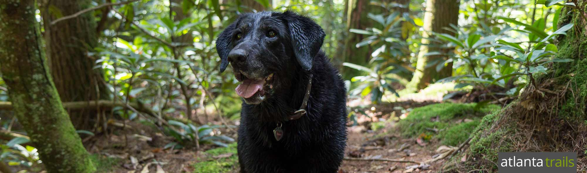 Best Dog Hikes in North GA Mountains